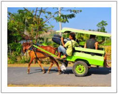 Local transport of Lombok island, Sasak tribe tour