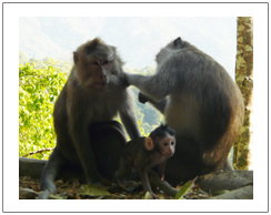 Pusuk rain forest to see monkeys in their natural habitat, Lombok waterfall tour